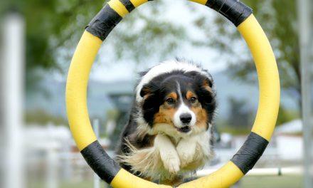 Skal du have hund? Husk hundetræning!